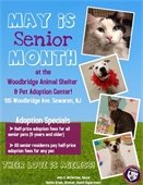 Senior Month at the Shelter